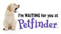 Looking For a New Pet to Adopt?