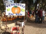 Venetucci Pumpkins For Sale