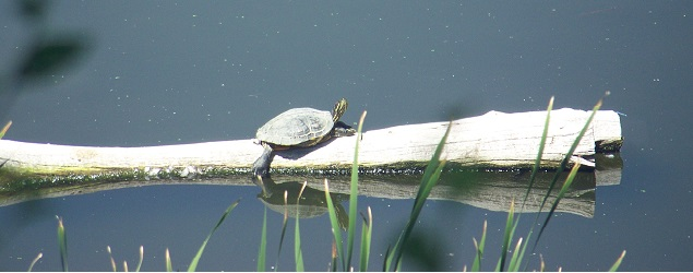 Turtle Time at the Fountain Creek Nature Center