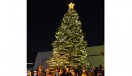 Annual Fountain Tree Lighting