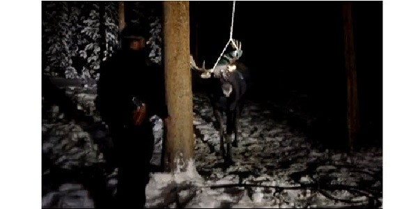 Video of moose tangled in backyard swing shows consequences of attracting wildlife