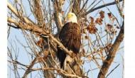 Pueblo Eagle Day Festival