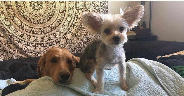 Please Help Find Roxie Missing Dog