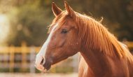 Equine Infectious Anemia Confirmed In Colorado