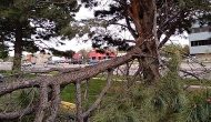 Tree Cleanup in Colorado Springs